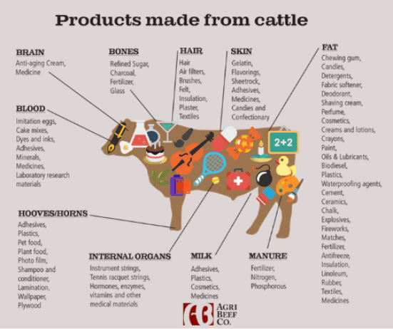 PRODUCTS MADE GROM CATTLE
